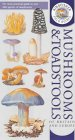 Mushrooms and Toadstools of Britain and Europe (Kingfisher Field Guides)
