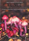 Fungi Of The Andean-Patagonian Forests: Field Guide To The Identification Of The Most Common And Attractive Fungi