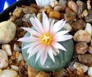 virid_flower.jpg