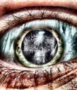 pupill.jpg