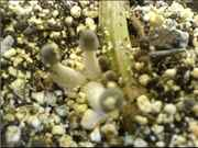 littleshrooms.jpg