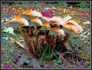 trippyshrooms.jpg
