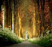 La_Cathedrale_Naturelle_by_LarsVanDeGoor.jpg