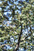 Tree_glass_HDR.3_UPLOAD.jpg