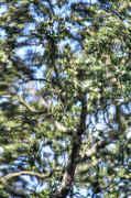 Tree_glass_HDR.3_UPLOAD.jpg