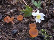 Mystery_mushroom.jpg