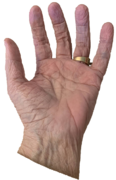 hand_lo_res.png
